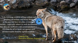 Wildlife Killing contest Video Play Button Still