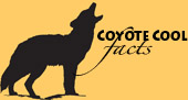 CoyoteCoolFacts_small 4